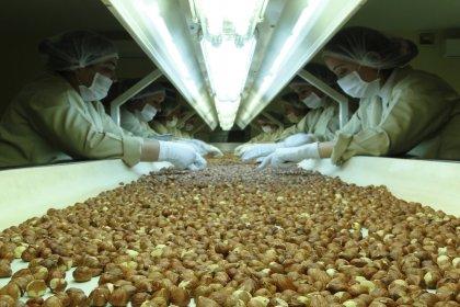 İtalyan şirket satın aldığı fındık fabrikasını kapattı, 300 işçi işsiz kaldı