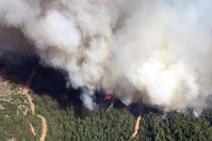 İzmir'de orman yangını: 45 hektarlık alan küle döndü
