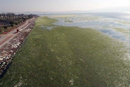 İzmir'deki görüntüyle ilgili korkutan uyarı: Önlem alınmazsa deniz kıyısında yürüyenler zehirlenebilir