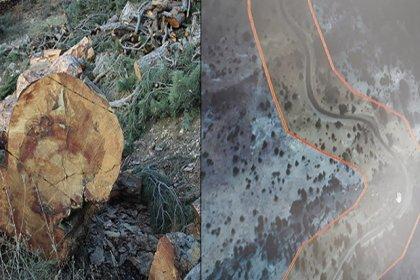 Karaman'da yol çalışması nedeniyle asırlık ağaçlar kesildi