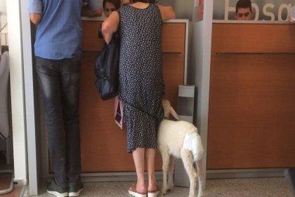 Kuzusuna bebek bezi bağladı, bankaya götürdü