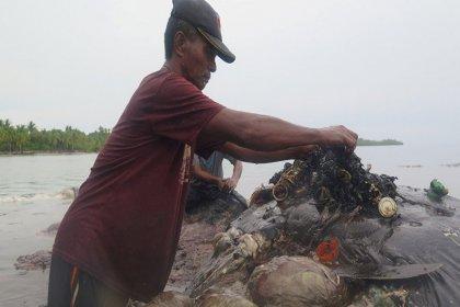 Ölü balinanın midesinden 6 kilo çöp çıktı: 115 plastik bardak, 4 pet şişe, 25 poşet ve 2 terlik