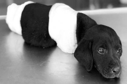Sakarya Valisinden bacakları kesilen yavru köpek ile ilgili açıklama