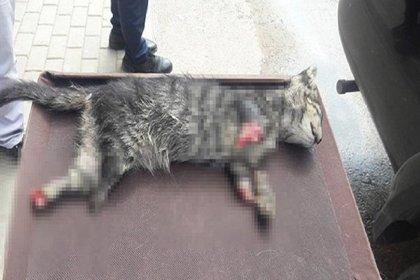 Sakarya'nın ardından bir vahşet de Bursa'dan: 4 ayağı kesilmiş yavru kedi ölü bulundu