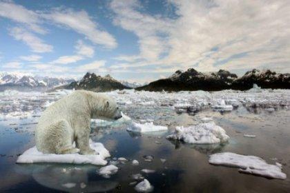 Son 44 yılda doğal yaşamın yüzde 60'ı yok oldu
