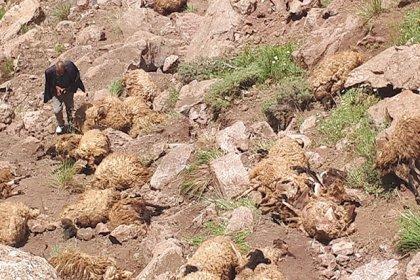 Van'da bir koyun uçurumdan atlayınca, sürüdeki 500 koyun da peşinden atlayıp telef oldu