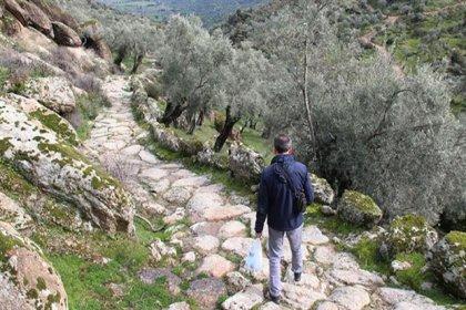 Zeytinliklere yol açmak için 2 bin 300 yıllık antik yolu tahrip ettiler