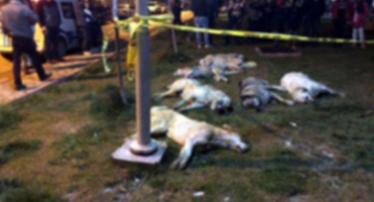 16 köpeği zehirleyen şüphelilerin serbest kalmasına yapılan itiraz reddedildi