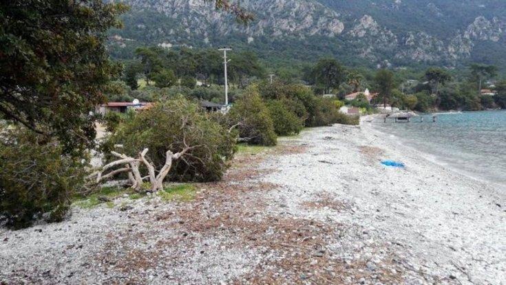 Akbük Koyu'nda ağaç katliamı, 2 kişi gözaltına alındı
