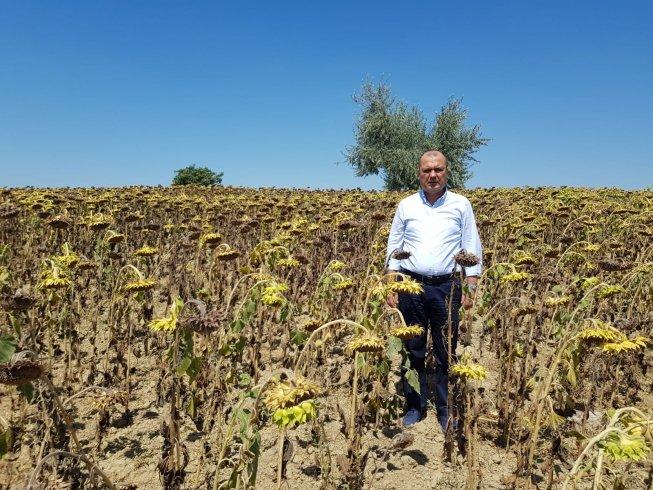 Ayçiçeği alım fiyatına CHP'li Aygun'dan tepki