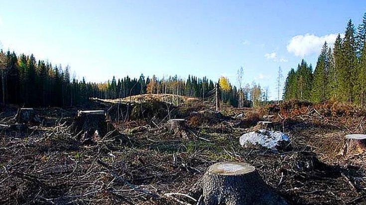 Bakanlığın onayladığı 180 bin ağacın kesilmesine ilişkin 'ÇED raporu' mahkemeden geri döndü