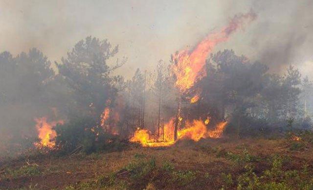 Bursa'daki yangınla ilgili kundaklama şüphesi
