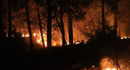 Dalaman'da orman yangını: 17 saat sonra kısmen kontrol altına alındı