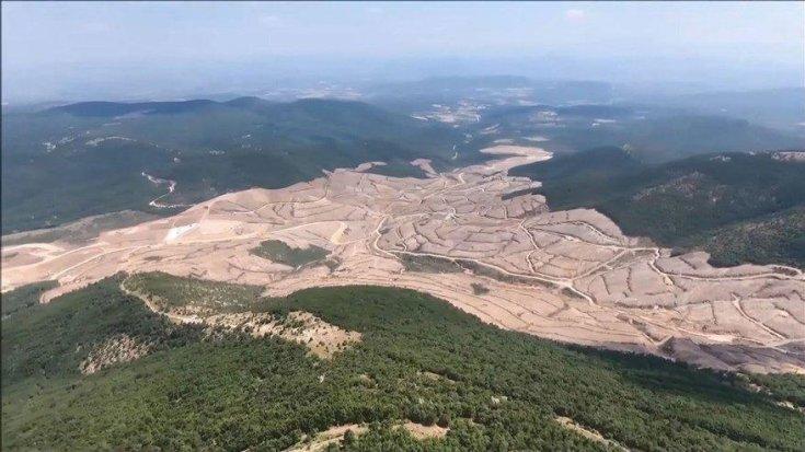 Kaz Dağları'nda 347 bin 815 ağacı katlettiler