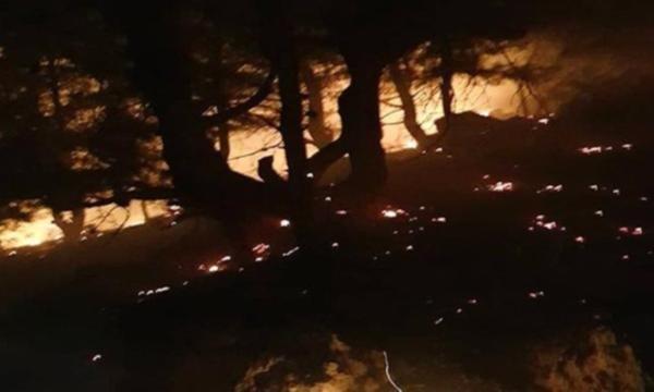 Kozan'da 5 dönüm kızılçam ormanı kül oldu