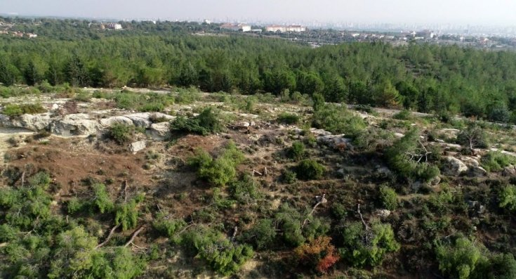 Mersin'de 72 dönümlük Hazine arazisindeki binlerce kızılçam ağacı kesildi