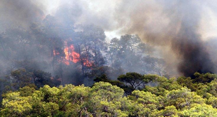 Orman yangınlarının yarısının faili meçhul