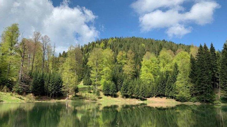 ÇED raporu kabul edilirse 34 bin 500 ağaç kesilecek