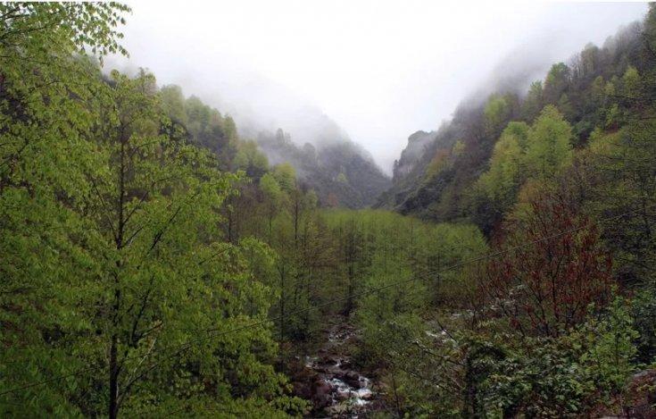 Rize'de bal ormanına taş ocağı açılmasına tepki