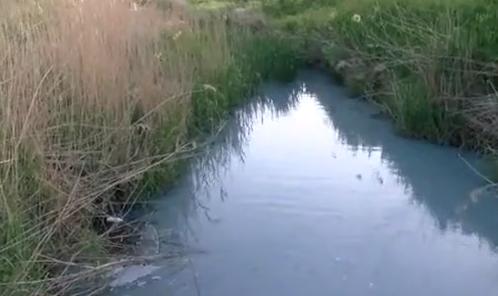 Tekirdağ'da yine çevre katliamı: Kurudere'ye boşaltılan kimyasal atık balıkları telef etti!
