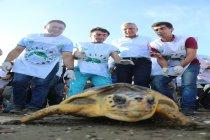 Mezitli Belediye Başkanı Neşet Tarhan: 100. Yıl Plajında doğa cinayeti işleniyor