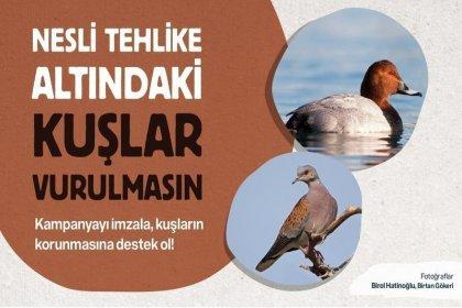 19 kurumdan ortak açıklama: Nesli tehlike altındaki kuşlar vurulmasın!