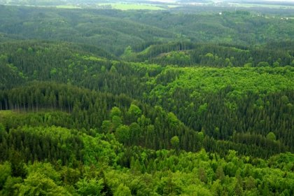 AB coğrafyasının yüzde 43'ü orman