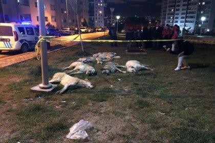 Ankara Batıkent'te 13 köpek zehirlenerek katledildi
