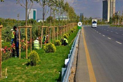Ankara Büyükşehir Belediyesi ithal ağaç dönemine son verdi