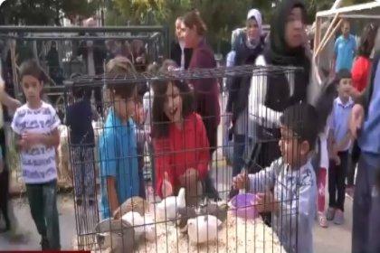 Ankara'da sokak hayvanları için ilk kez bir çalıştay düzenleniyor
