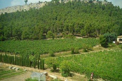 Atatürk Orman Çiftliği arazilerinin metrekaresi 1 liradan kiralanıyor!