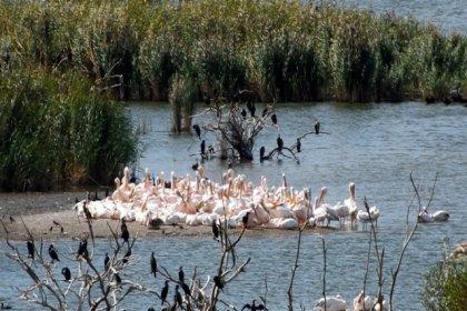Atık yuvasına dönen Manyas Kuş Gölü alarm veriyor!