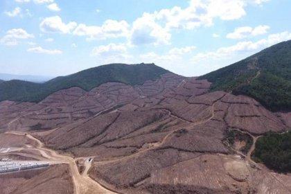 Bakanlık Kaz Dağları'ndaki katliamı böyle savundu: Altın ithalatına 8,5 milyar dolar ödüyoruz!