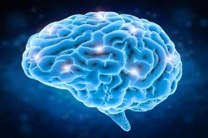 Beyin 90'lı yaşlara kadar yeni hücre üretebiliyor