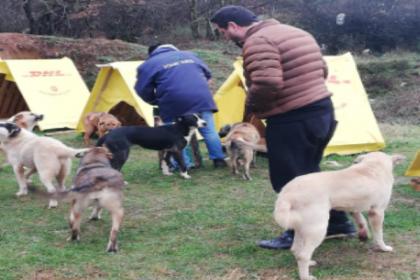 Bosna Sancak Derneği'nden sokak hayvanlarına mama