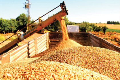 Buğday alım fiyatlarındaki yüzde 29'luk artış, çiftçinin beklentilerini karşılamadı