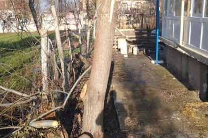 Cemaatin şikayetiyle tayini çıkan imam 11 yıl görev yaptığı caminin bahçesindeki ağaçları kesti