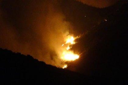 Ceyhan'da orman yangını