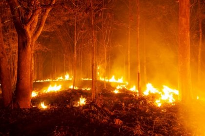 ÇYDD'den yangın açıklaması: İçimiz yanıyor ve yüreğimiz parçalanıyor!