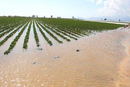 Doğal afetler çiftçiyi vurdu: Toplam borç 113 milyar liraya ulaştı