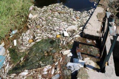Foça ve Menemen'deki balık ölümleri Meclis gündeminde