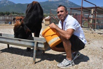 Haluk Levent'ten kesimden kaçan boğayla ilgili paylaşım: Görenler ihbar etsin Ferdinand'ın yanına alalım