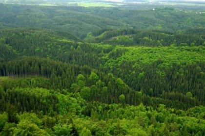 İklim değişikliğine çare ormanlaştırma