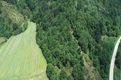 Kandıra'da taş ocağı için 5 bin ağaç kesilecek!