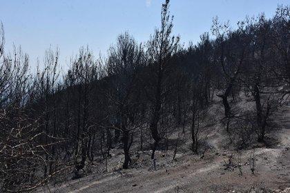 Karabağlar'daki yangında 50 yıllık çam ağaçları yandı!
