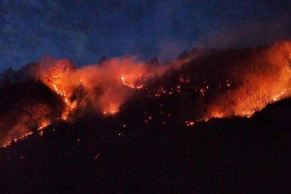 Karadeniz'de 4 ilde orman yangını