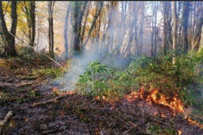 Karadeniz'de 71 noktada yangınlar sürüyor