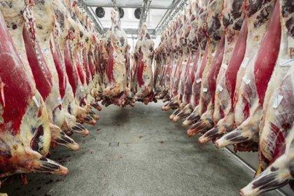 Kırmızı et ithalatı yüzde 233 arttı