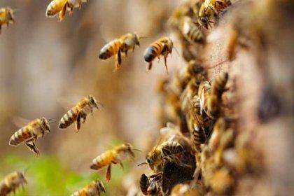 Konya'da arı dehşeti: 19 işçi hastaneye kaldırıldı