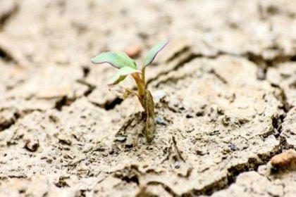 Mars'ta bile canlı kalabilen dünyanın en dayanıklı bitkileri